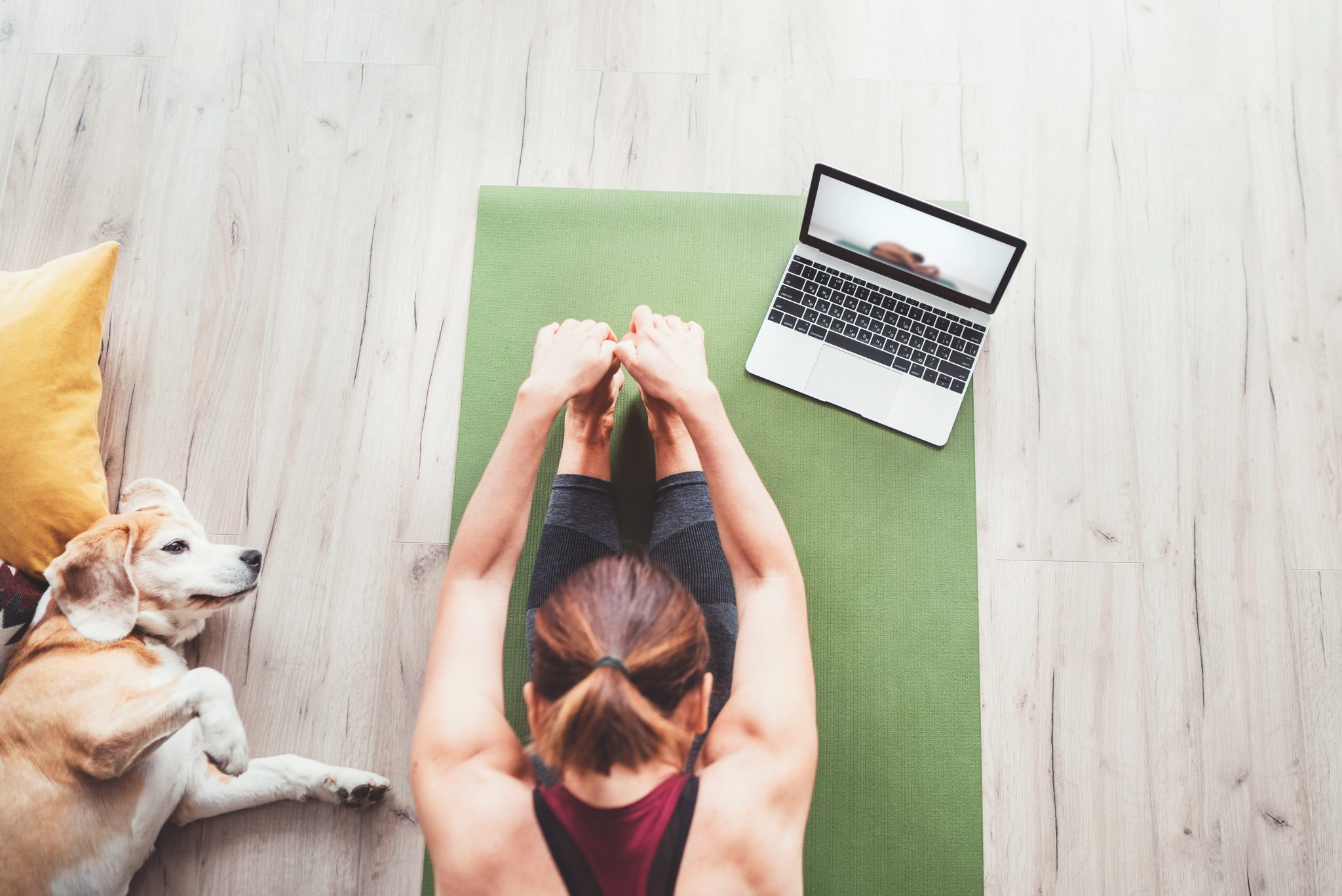 Woman practicing yoga on laptop with dog